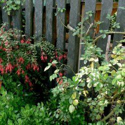 Les atouts d'une clôture artificielle