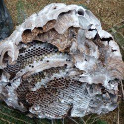 Destruction de nids de nuisibles