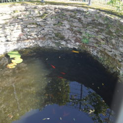 Bassin de jardin, faites appel à un paysagiste professionnel